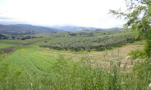 Terreno nel territorio di Cupello (Montalfano) rif.31